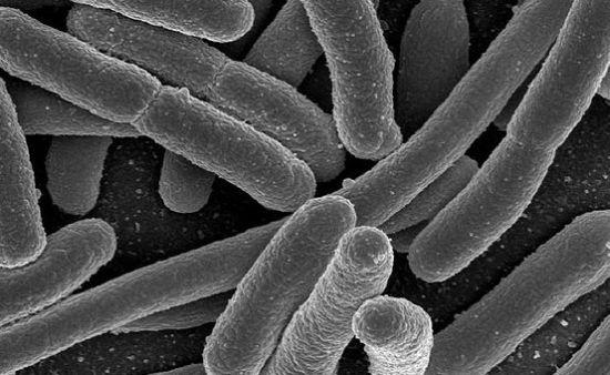 e coli in water - photo #21