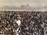 Bailie standing in corn field with Hanford plants in the background, 1985. (Photo credit: Spokesman-Review)