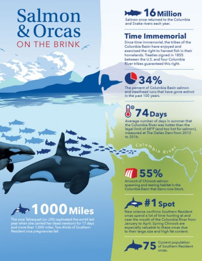 salmon and orca infographic
