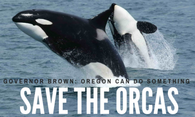Save the Orcas, Gov Brown Can Do Something