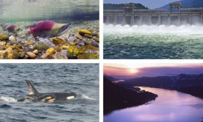Left to right: Sockeye salmon by Russ Ricketts (vimeo.com/riversnorkel); Bonneville Dam by Brett VandenHeuvel, orcas by NOAA Fisheries West Coast, Gorge sunset by Nicole Mark (nicolemarkphotography.com).